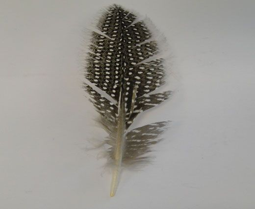 Feather-FR-05