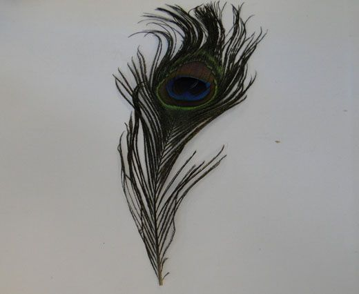 Feather-FR-06