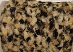 Braided Flat Hair-on Leather-Leopard Skin