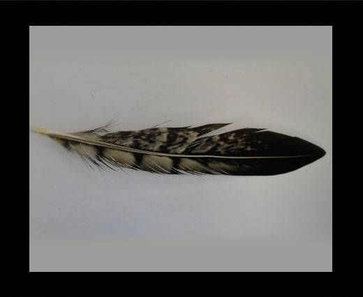 Feather-FR-04